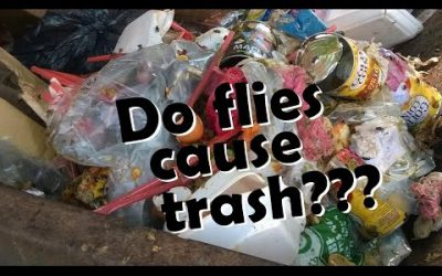 Do Flies Cause Trash???