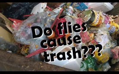 Do Flies Cause Trash???